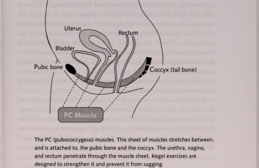 muschii pubococigieni au un rol in squirt