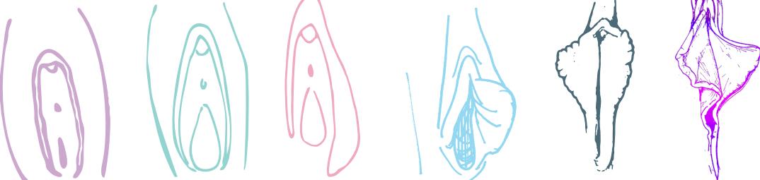 dezvoltarea labiilor